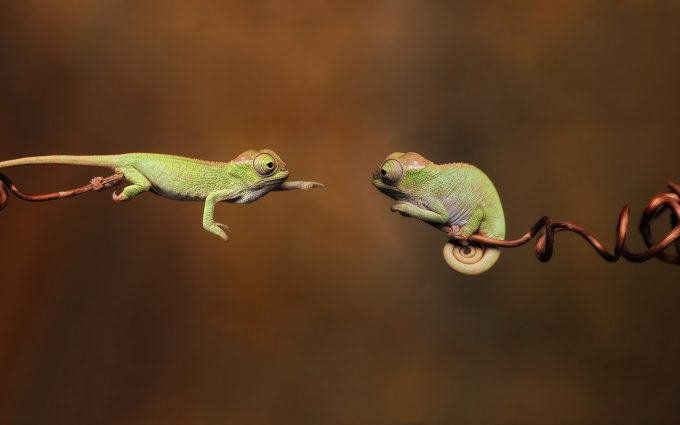 chameleon wallpapers beautiful