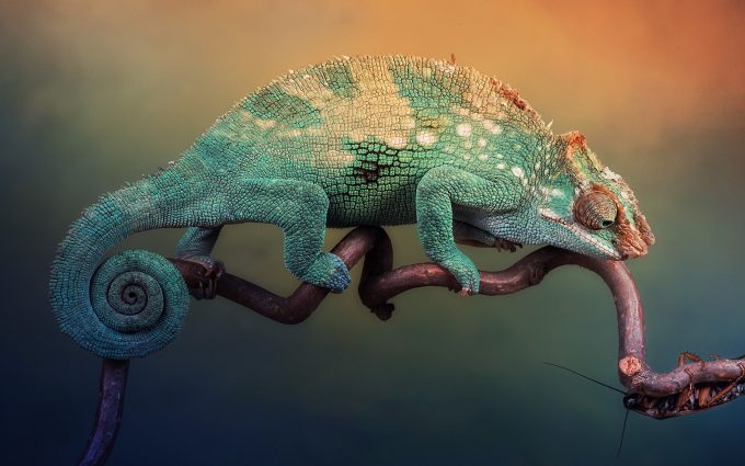 chameleon wallpapers hd
