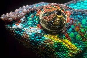 chameleon wallpapers pc