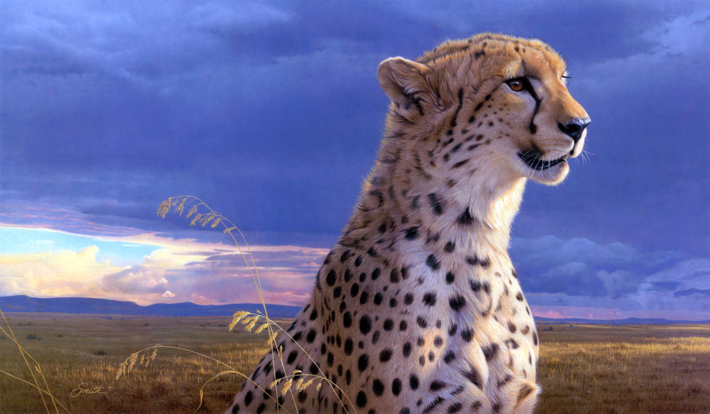 cheetah photos free HD Desktop Wallpapers 4k HD