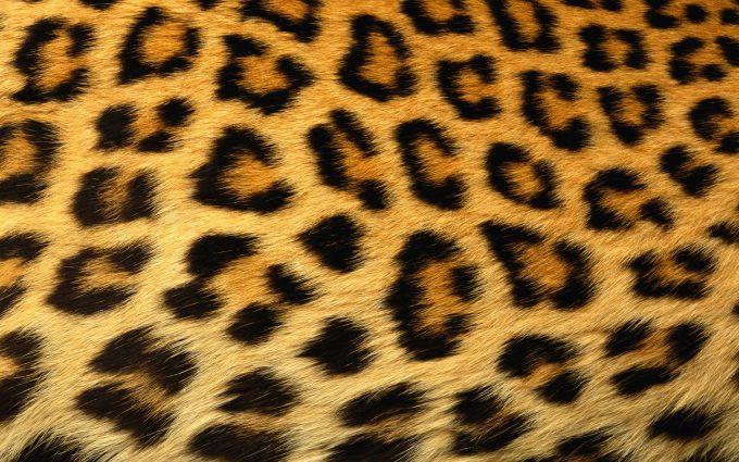 cheetah print hd