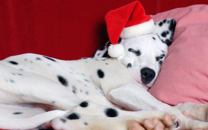 christmas dog wallpaper