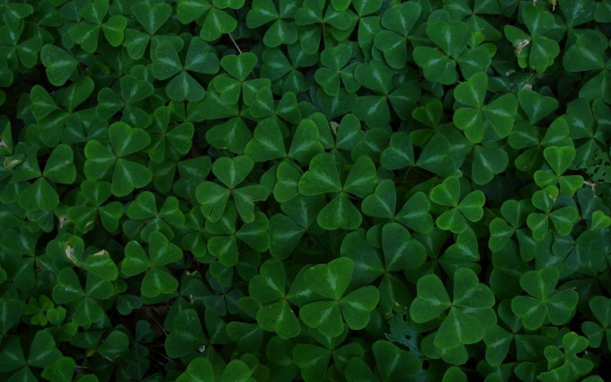 clover wallpaper 1080p hd