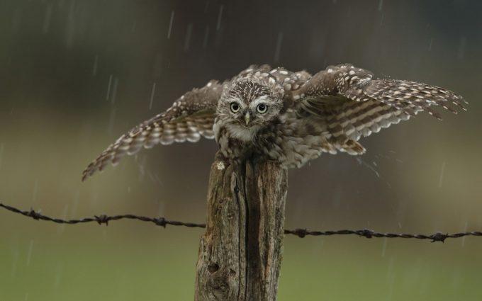 coffee owl wallpaper