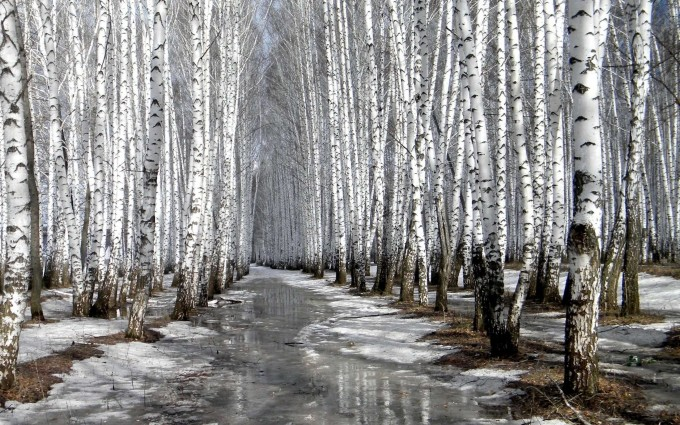 cold forest wallpaper