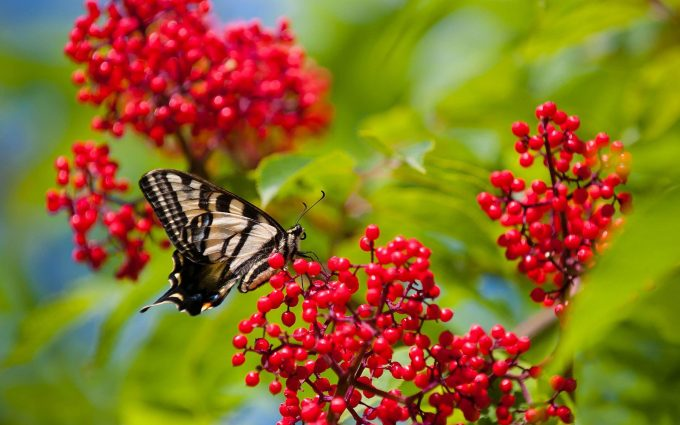 colorful butterfly pictures