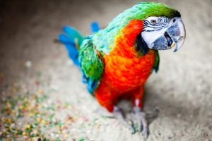 colorful parrot pictures