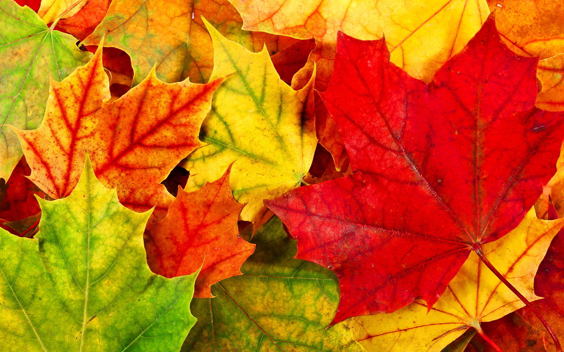 colourful leaves wallpapers