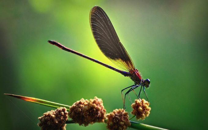 cool dragonfly pictures