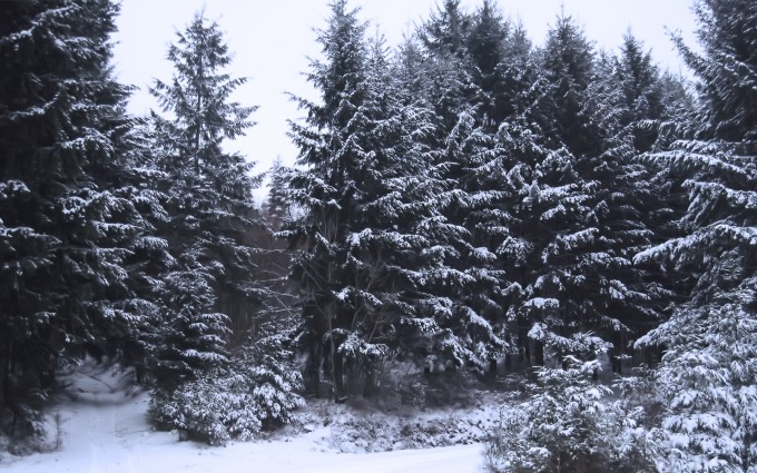 cool forest wallpapers frozen