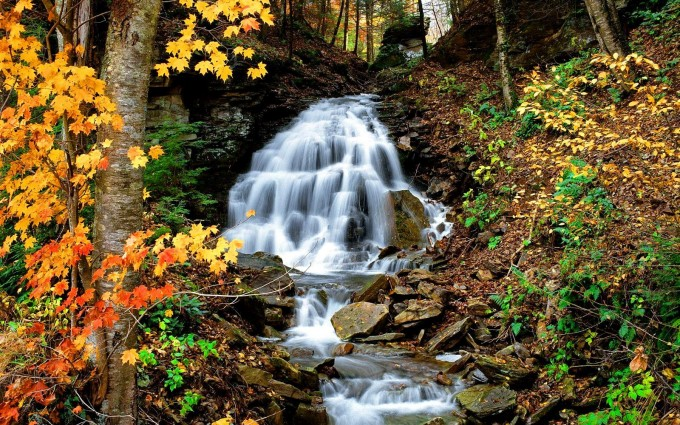 cool forest wallpapers waterfall