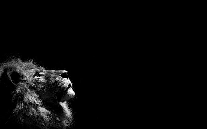 cool lion pictures