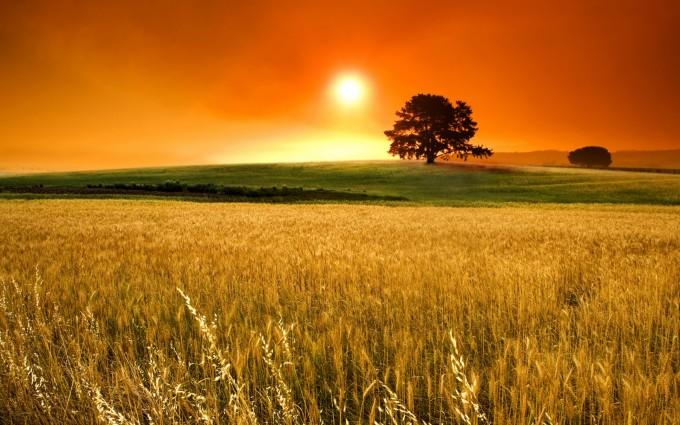 corn field laptop