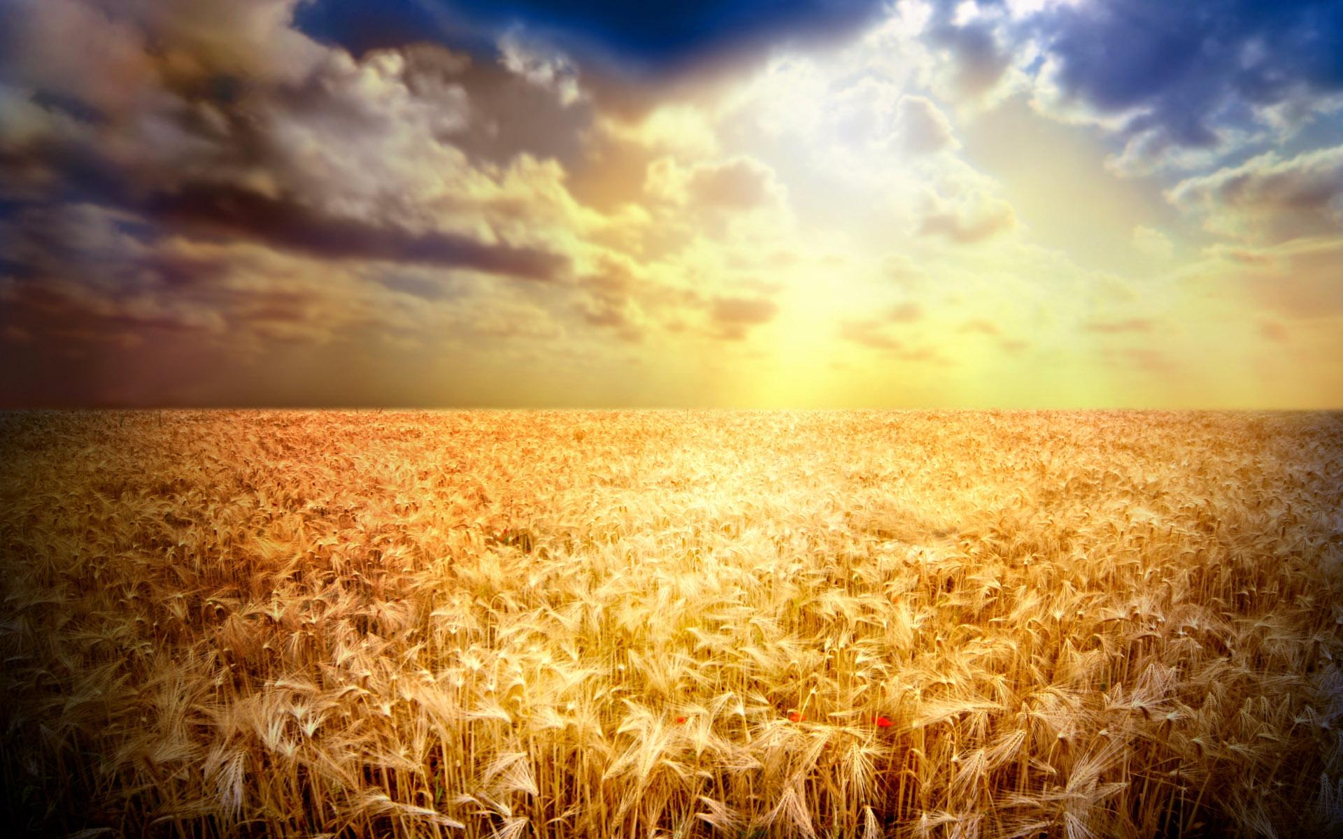 corn field tablet