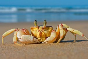 crab backgrounds
