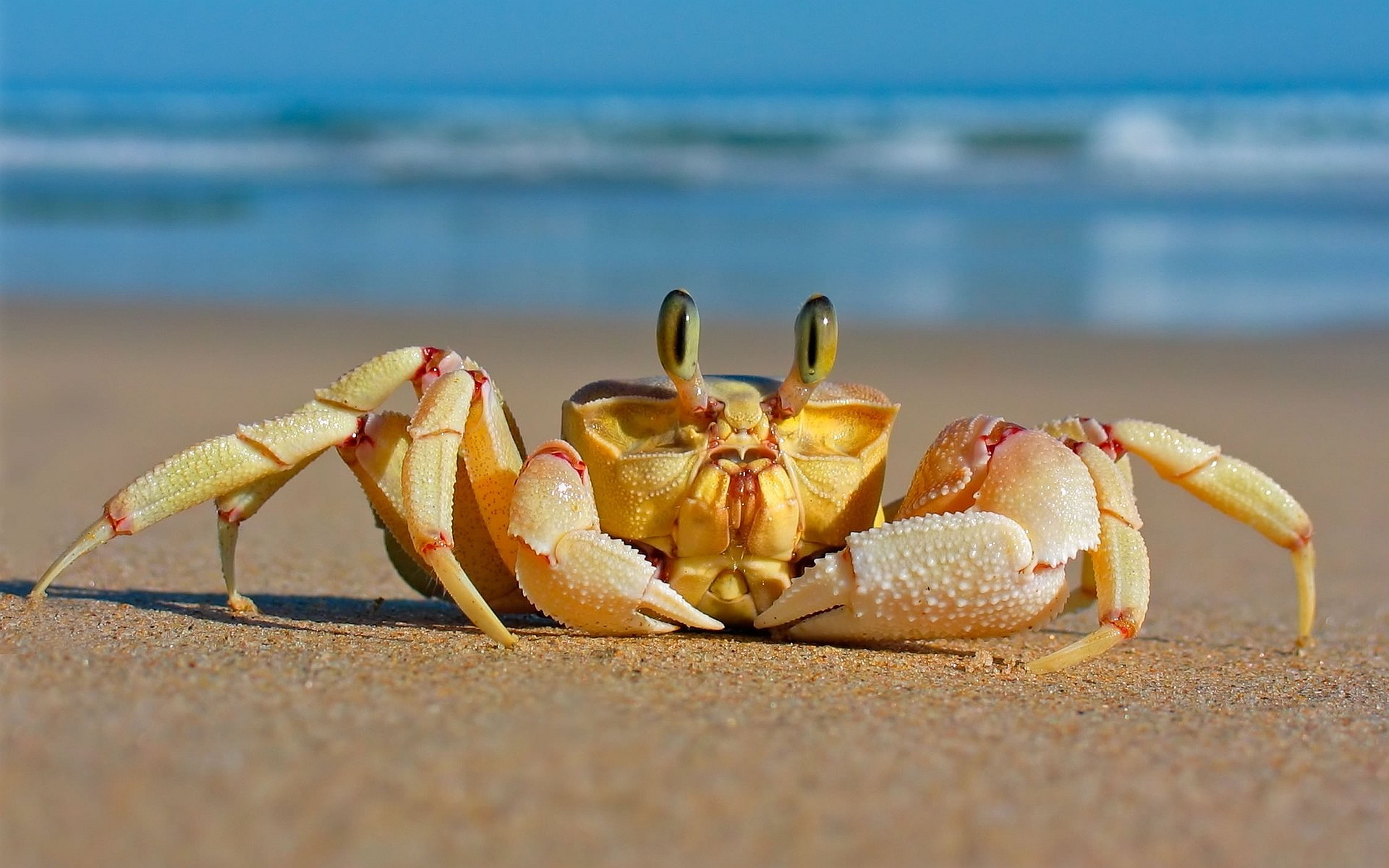 crab wallpapers hd