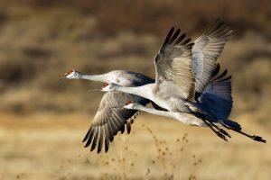 crane bird pictures