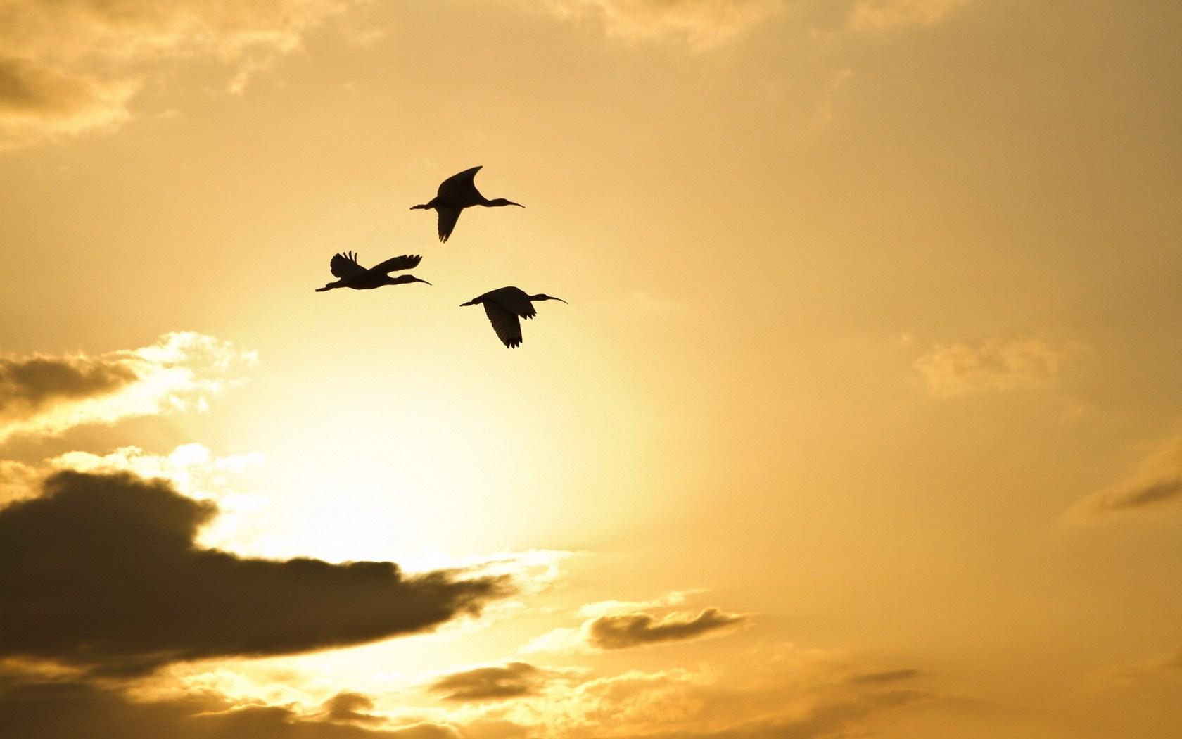 crane bird wallpaper