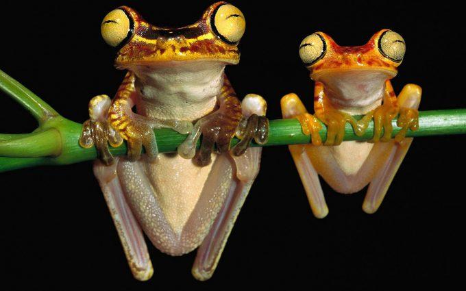 crazy frog wallpaper