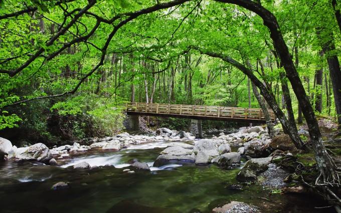 creek wallpaper