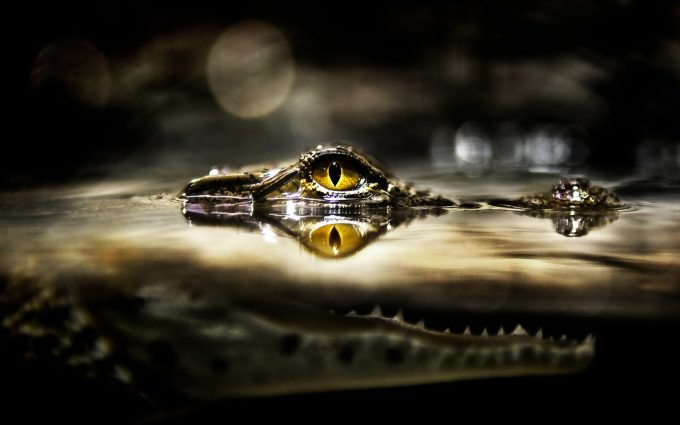 crocodile eye hd