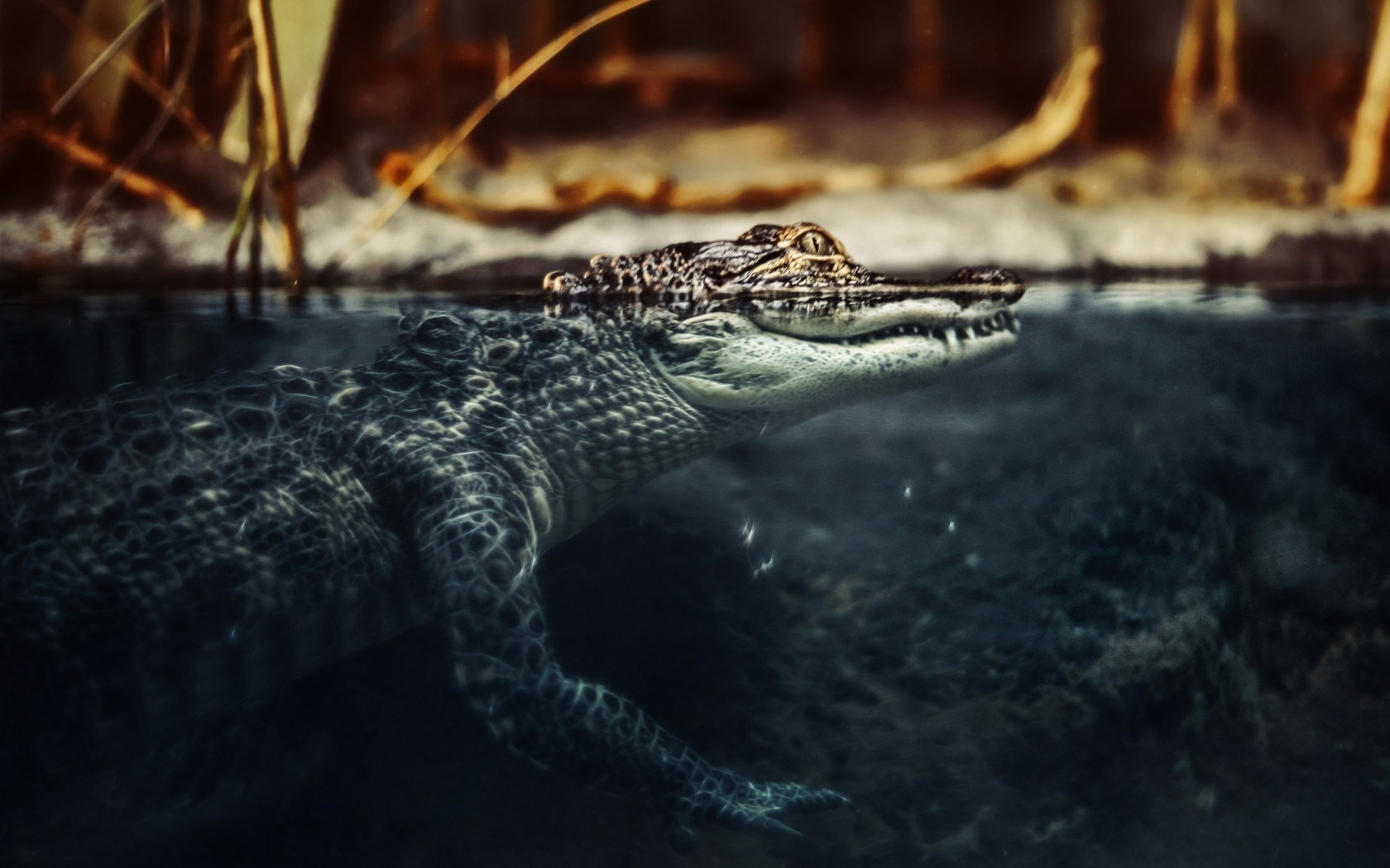 crocodile wallpaper hd