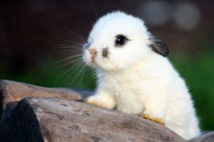 cute A1