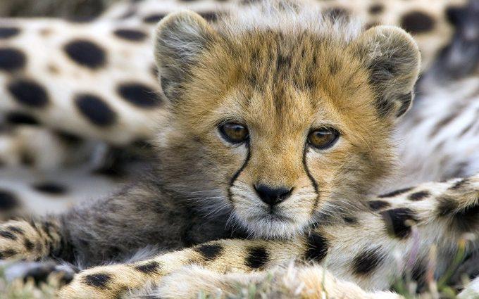 cute animals A11