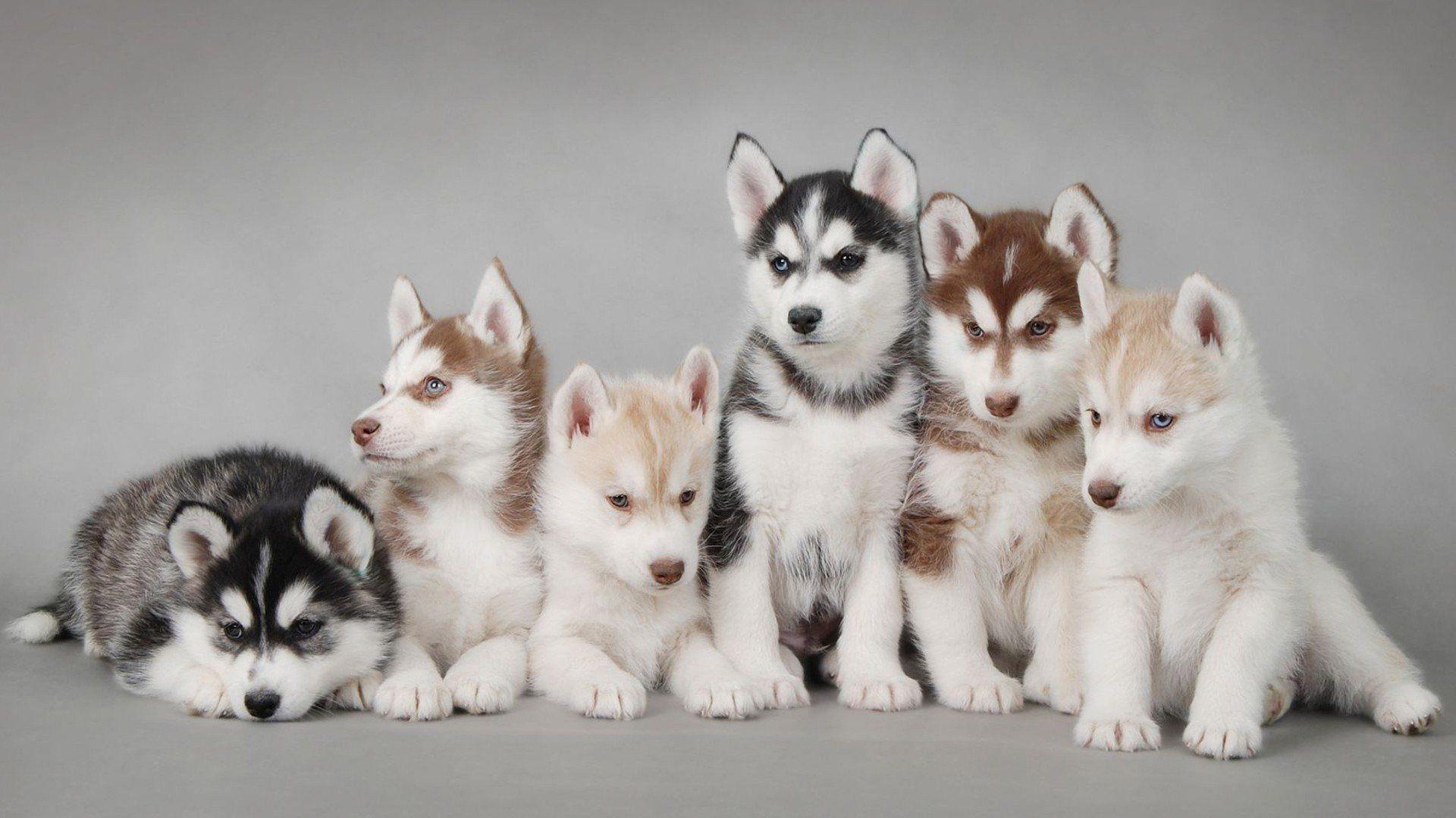 cute animals A4