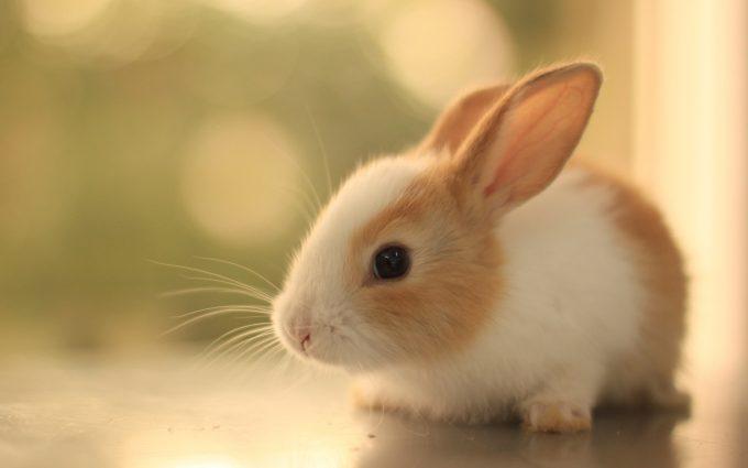 cute animals A6