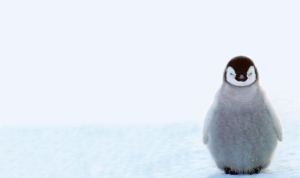 cute baby penguins a4 hd desktop wallpapers 4k hd