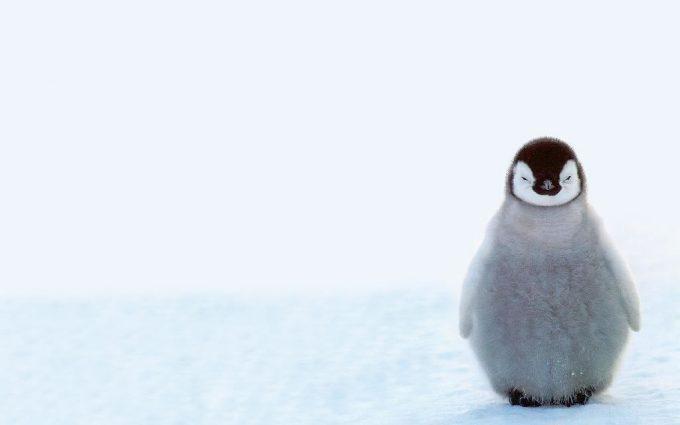 cute baby penguins A4