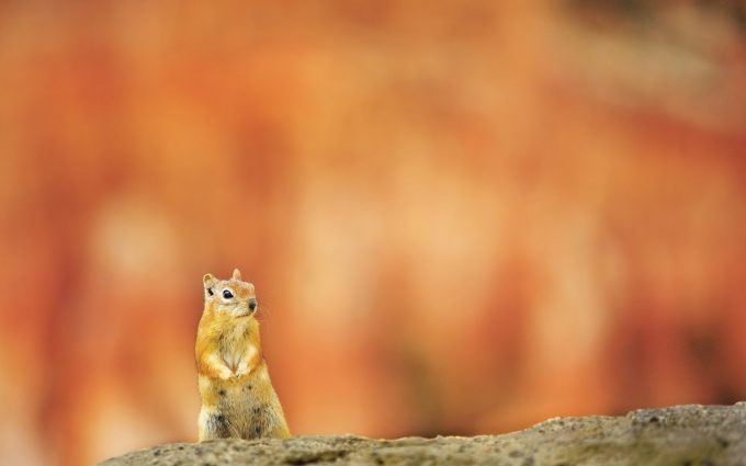 cute baby squirrel pictures