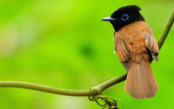 cute bird wallpaper A2