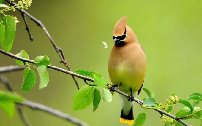 cute bird wallpaper A4