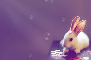 cute bunny rabbit wallpaper