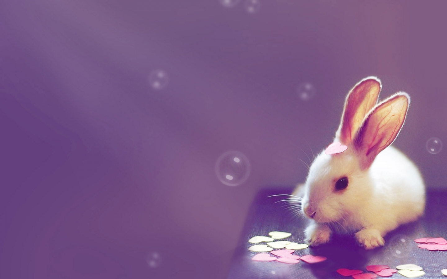 cute bunny rabbit wallpaper hd desktop wallpapers 4k hd