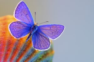cute butterfly wallpaper desktop