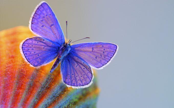 cute butterfly wallpaper desktop