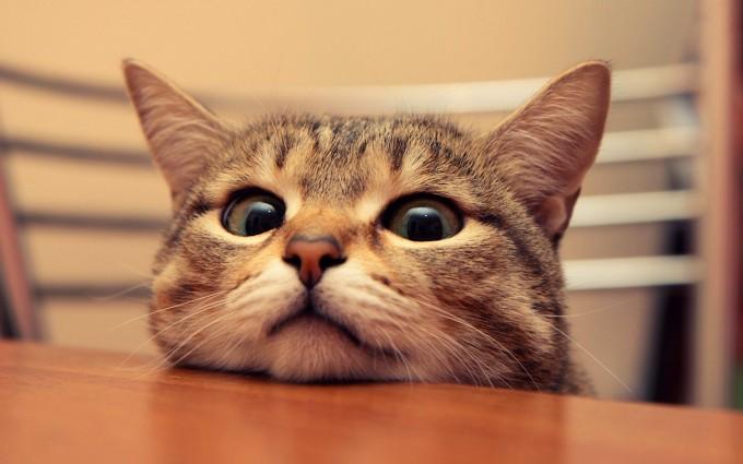 cute cat desktop wallpaper
