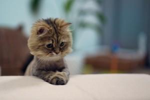 cute cat images download