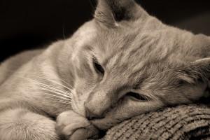cute cat photo download
