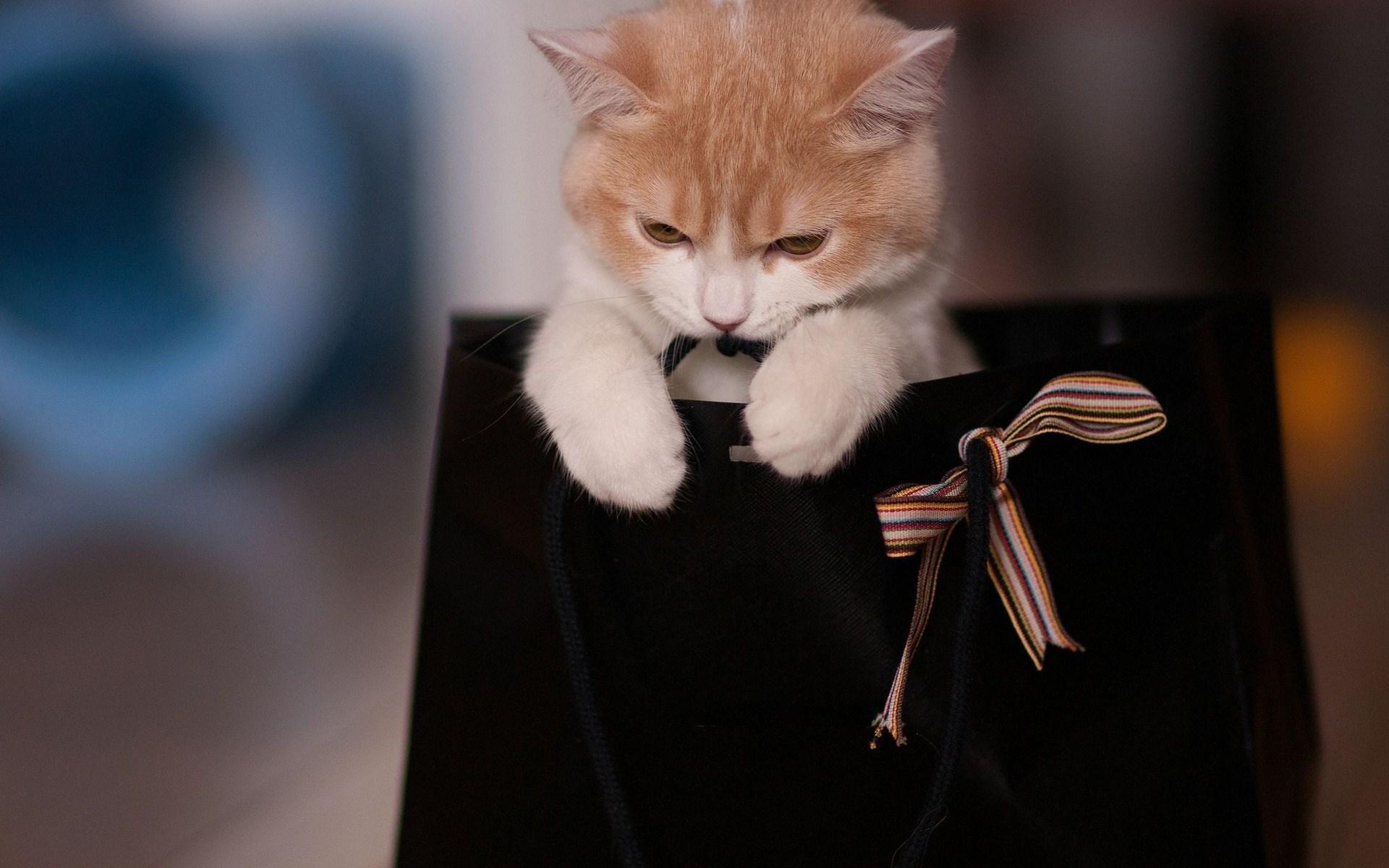 cute cat photos wallpaper
