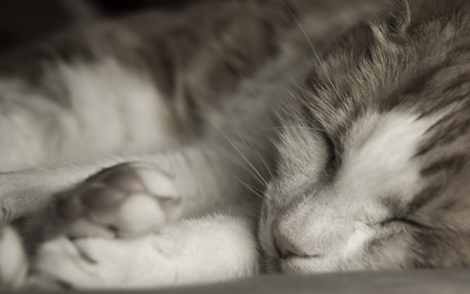 cute cat pictures download
