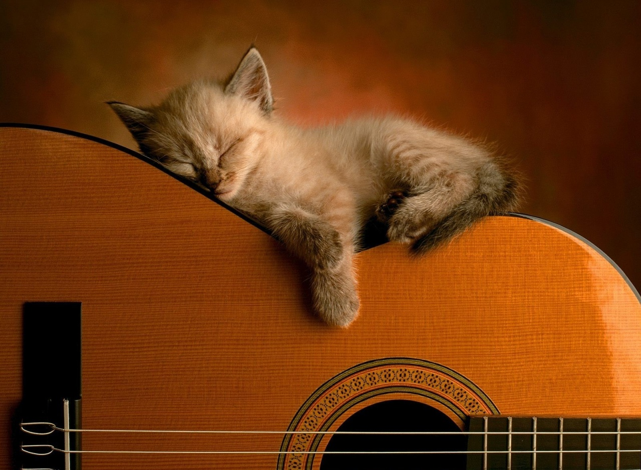 cute cat pictures wallpaper