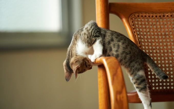 cute cat wallpaper desktop
