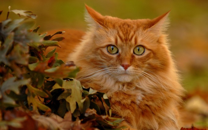 cute cat wallpapers hd