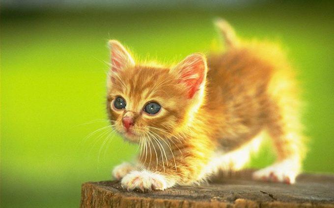 cute cat wallpapers kitten