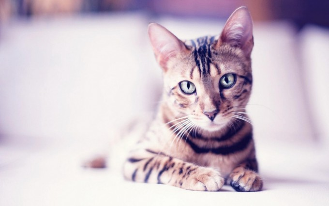 cute cats and kittens wallpaper