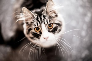 cute cats photos download